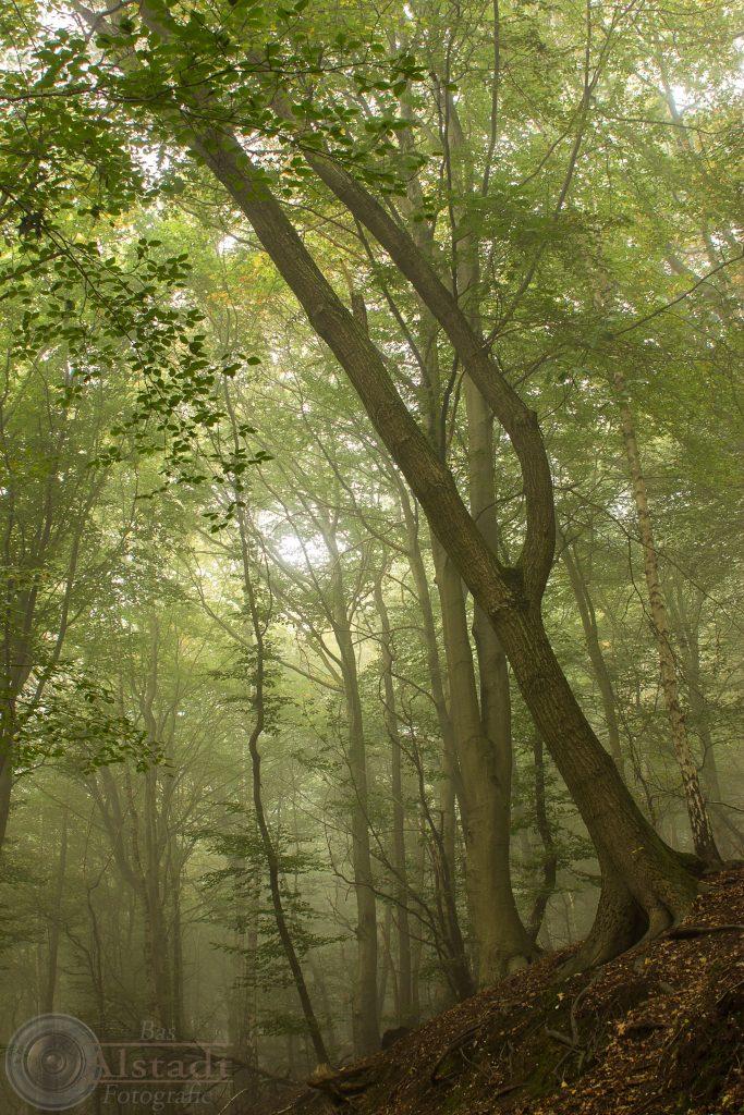 Sprookjesachtig bos, de St. Jansberg